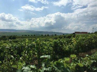 Wineyards Salin